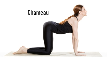 exercice chameau